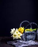Witte en gele gele narcissen in de grijze mand op donkere achtergrond Royalty-vrije Stock Afbeelding