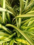 witte en groene bladtextuur Royalty-vrije Stock Foto's