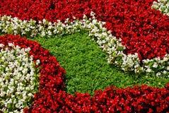 Witte en rode bloemen. royalty-vrije stock afbeeldingen