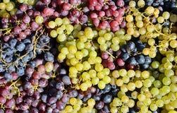 Witte en rode druiven Stock Afbeeldingen