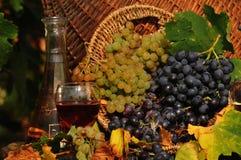 Witte en rode druiven in een vat wijn royalty-vrije stock fotografie