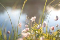 Witte en roze bloemen met hemel en bomenbezinning stock afbeeldingen