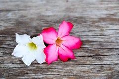 Witte en roze bloemen op houten lijst Royalty-vrije Stock Afbeeldingen