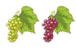 Witte en roze druiven. Stock Fotografie