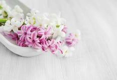 Witte en roze hyacintbloemen Het plaatsen van het kuuroord royalty-vrije stock fotografie