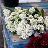 Witte en roze hyacinten en perilla purpere pioen Royalty-vrije Stock Foto's