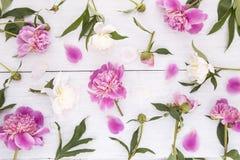 Witte en roze pioenen royalty-vrije stock fotografie