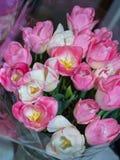 Witte en Roze tulpen Royalty-vrije Stock Foto's