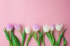 Witte en roze tulpen op een roze achtergrond Conceptie van de Dag van Vrouwen, de Dag van Valentine, Moederdag, de Lente Selectie royalty-vrije stock afbeeldingen