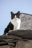 Witte en zwarte Cat On The Roof Royalty-vrije Stock Afbeelding