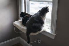 Witte en Zwarte Cat Sitting op Vensterrichel Royalty-vrije Stock Foto