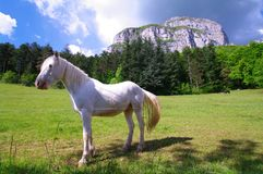 Witte en zwarte paarden Stock Fotografie
