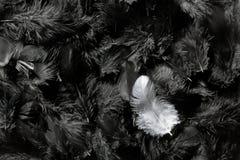 Witte en zwarte veren royalty-vrije stock afbeelding