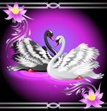 Witte en zwarte zwaan en lelies Royalty-vrije Stock Afbeeldingen