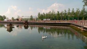Witte en zwarte zwanen op de stadsvijver met een huis voor vogels stock videobeelden