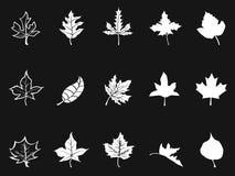 Witte esdoornpictogrammen op zwarte achtergrond royalty-vrije illustratie