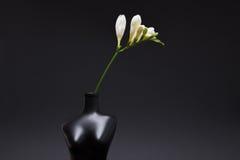 witte fresia in vaas op zwarte achtergrond Stock Foto's