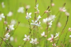 Witte Gebiedsbloemen Royalty-vrije Stock Fotografie