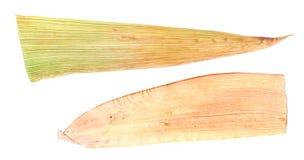 Witte gedrukt die maïsbladeren op wit worden geïsoleerd Royalty-vrije Stock Foto