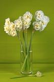 Witte gele narcissen Stock Fotografie