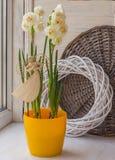 Witte gele narcissen in een pot Stock Fotografie
