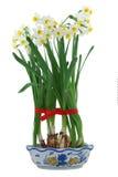 Witte gele narcissen in vaas Stock Afbeeldingen