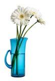 Witte gerberas in blauw stock foto's