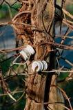 Witte glas schermende isolatie stock fotografie