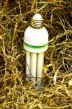 Witte gloeilamp op droog gras Het concept van de biomassaenergie Royalty-vrije Stock Foto's