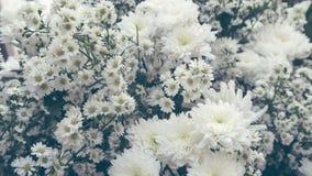 Witte Gypsophila-bloem royalty-vrije stock afbeelding