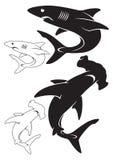 Witte haai Stock Foto's
