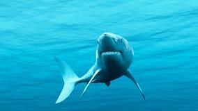 Witte Haai Stock Afbeelding