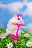 Witte hamster die op een autoped berijden Royalty-vrije Stock Foto