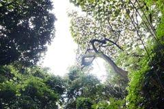 Witte hemel binnen een bos stock fotografie