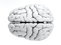 Witte hersenen Royalty-vrije Stock Fotografie