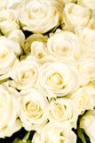 Witte het huwelijk nam boeket toe Royalty-vrije Stock Foto's