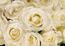Witte het huwelijk nam boeket toe Stock Foto's
