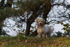 Witte hond Royalty-vrije Stock Afbeeldingen