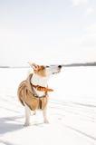 Witte hond in aard Royalty-vrije Stock Foto's