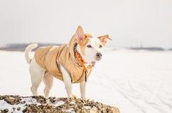 Witte hond in aard Royalty-vrije Stock Fotografie