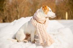 Witte hond in aard Stock Afbeeldingen