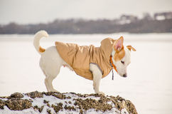 Witte hond in aard Stock Afbeelding