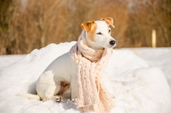 Witte hond in aard Stock Fotografie