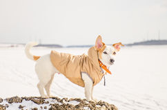 Witte hond in aard Stock Foto's