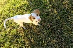 Witte hond in de tuin royalty-vrije stock fotografie