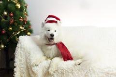 Witte hond in een rode sjaal en een hoed royalty-vrije stock afbeeldingen