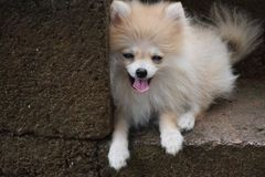 Witte hond en muur stock foto