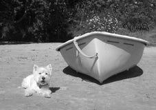 Witte hond naast een het roeien rubberboot op een strand Stock Afbeelding