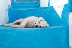 Witte hond op blauwe treden Stock Fotografie