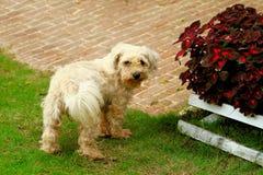 Witte hond in tuin Royalty-vrije Stock Foto